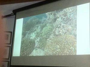 Rescate de Coral